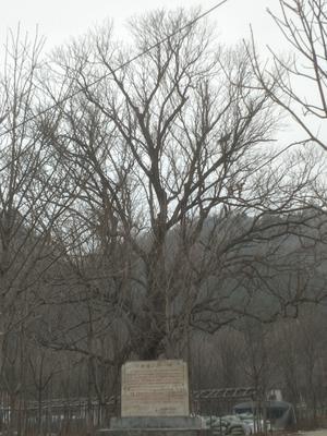 河南省南阳市西峡县七叶树