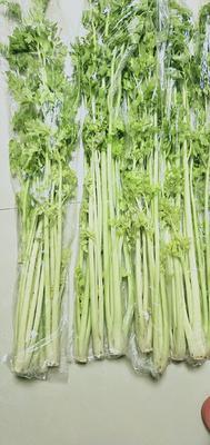 山东省青岛市平度市马家沟芹菜 55~60cm 0.5斤以下 露天种植