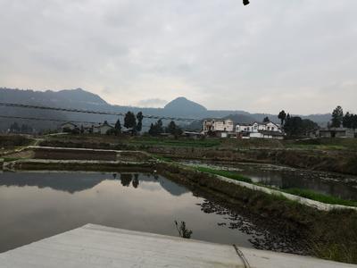 四川省巴中市恩阳区小龙虾苗