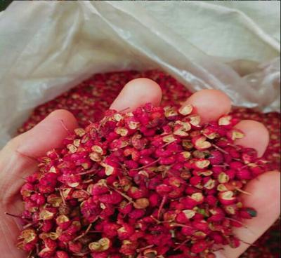 陕西省渭南市韩城市大红袍花椒 二级 干花椒