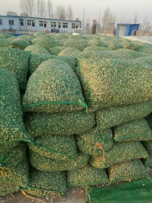 山西省忻州市忻府区油料花生米 2-3个月 散装