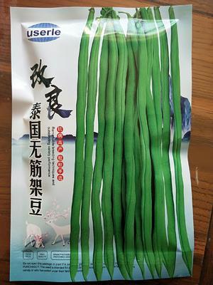 甘肃省张掖市山丹县长青豆角种子  改良泰国架豆