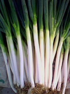 四川省成都市成华区长白大葱 混装通货 净葱