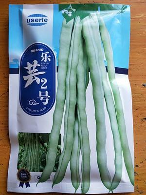 甘肃省张掖市山丹县白皮豆角种子  乐芸2号
