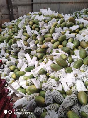云南省昆明市官渡区红心木瓜 2.5 - 3斤