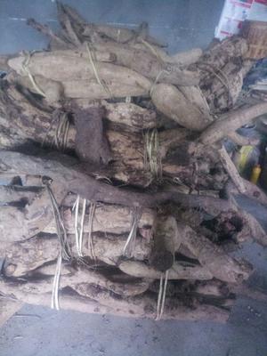 安徽省安庆市岳西县野生葛根 1.0-1.5斤 正宗大别山野生葛根