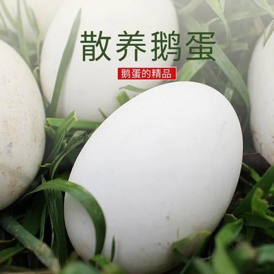 山东省滨州市无棣县鲜鹅蛋 食用 箱装