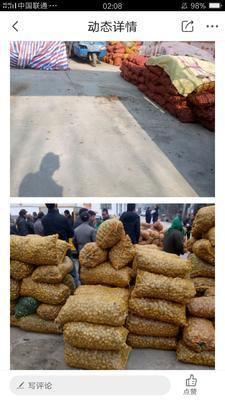 陕西省商洛市商州区白洋姜