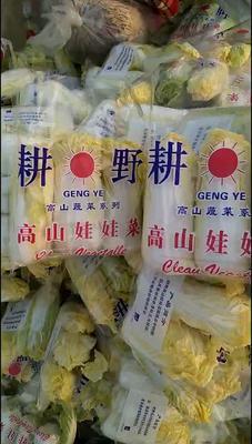 山东省枣庄市市中区高山娃娃菜 10两以上