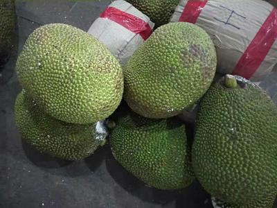 广西壮族自治区崇左市凭祥市红肉菠萝蜜 10斤以下