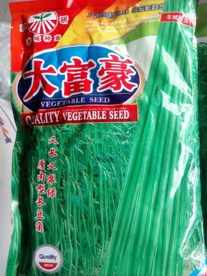 河南省周口市西华县油青豆角种子 ≥85%