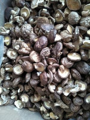 河南省郑州市惠济区香菇片 箱装 1年以上