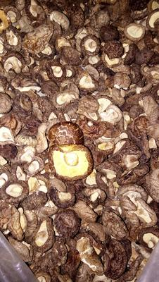 河北省石家庄市鹿泉区细鳞香菇干 袋装 1年以上
