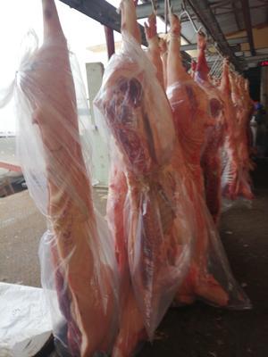 山东省聊城市冠县猪肉类 生肉