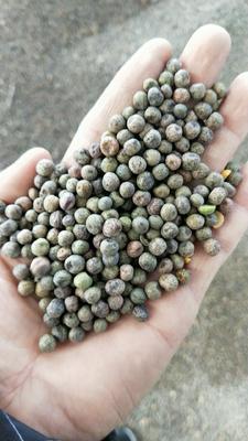 广东省广州市白云区麻豌豆 5-7cm