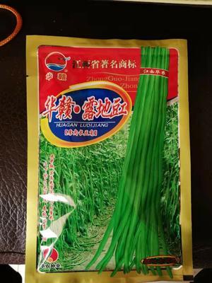 山东省潍坊市诸城市长青豆角种子 ≥95%