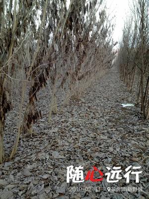 河南省南阳市新野县红花紫荆
