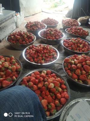 江苏省南通市海门市红颜草莓 20克以下