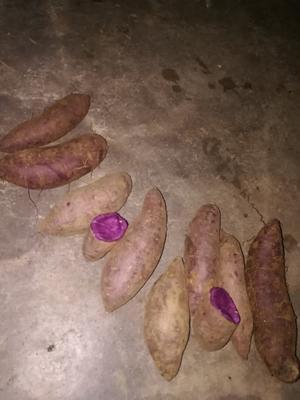 山东省临沂市莒南县紫罗兰紫薯 混装通货