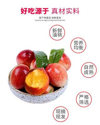 辽宁省大连市中山区126油桃 2两以上 50mm以上
