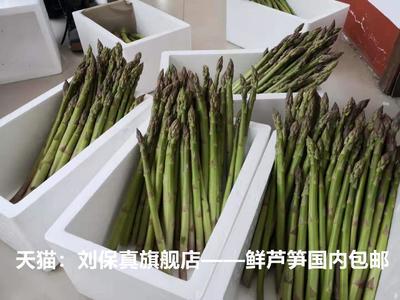 山东省菏泽市曹县绿芦笋 20~30cm