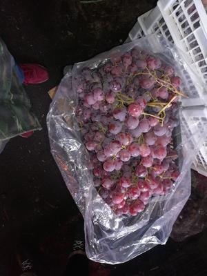 新疆维吾尔自治区乌鲁木齐市东山区红提 2斤以上 5%以下 1次果