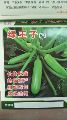 山东省潍坊市寿光市绿王子西葫芦种子