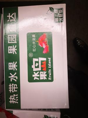 上海闵行区金都一号火龙果 大(7两以上)