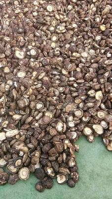河南省南阳市西峡县普通干香菇 散装 1年