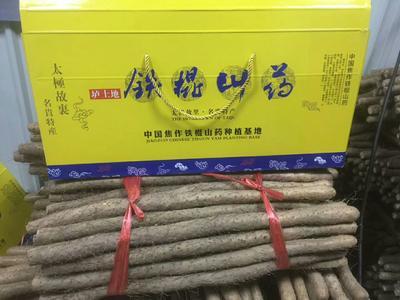 河南省郑州市二七区铁棍山药 50~70cm