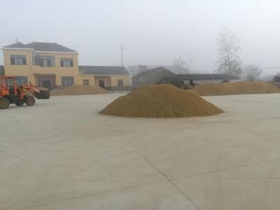 江苏省南京市六合区两优688 中稻/一季稻