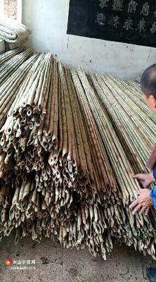 河北省唐山市迁西县速生白蜡 3.5~5米