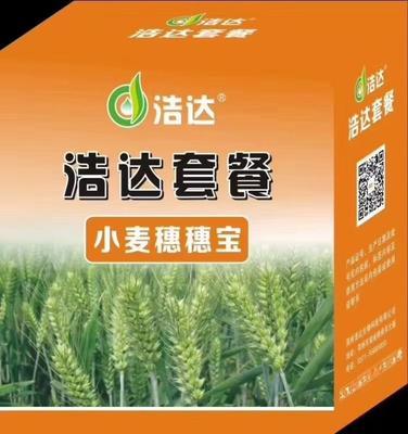 河南省郑州市金水区普通小麦