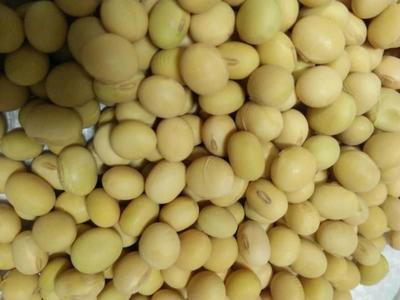 山东省济南市历城区黄豆种子 大田用种 ≥99% ≥95% ≤7%