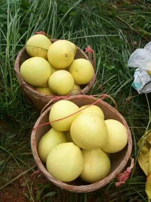 广东省惠州市惠阳区紫香一号百香果 统货