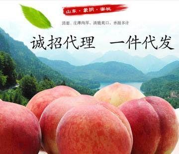 山东省临沂市蒙阴县水蜜桃 55mm以上 3 - 4两