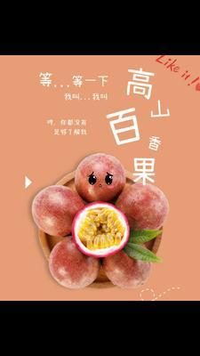 广西壮族自治区河池市凤山县紫色百香果 70 - 80克