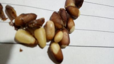 河北省石家庄市鹿泉区松子  12-18个月 包装 中等个东北松子