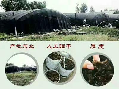 黑龙江省哈尔滨市阿城区柞树木耳 1年以上