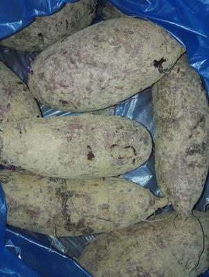 湖南省衡阳市常宁市富硒紫薯 混装通货