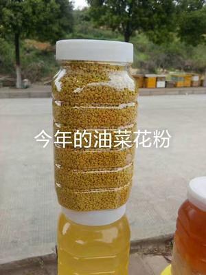 河南省平顶山市舞钢市油菜花粉 24个月以上