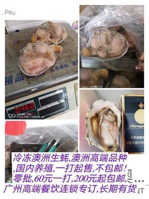 广东省广州市海珠区生蚝