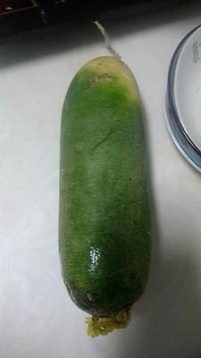 黑龙江省齐齐哈尔市龙沙区水果萝卜 1~1.5斤