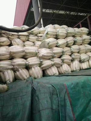 河北省邯郸市丛台区白萝卜 2~2.5斤