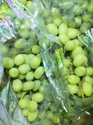 广东省广州市白云区青提 1.5- 2斤 5%以下 1次果