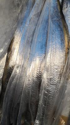 福建省厦门市湖里区野生带鱼 野生 1-1.5公斤