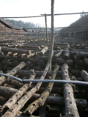 陕西省汉中市西乡县普通干香菇 散装 1年