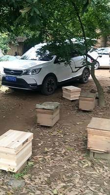 广西壮族自治区贵港市桂平市中华蜜蜂