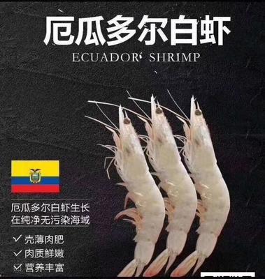 河南省郑州市惠济区南美白对虾 野生 7-9钱