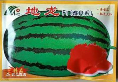 河南省商丘市睢阳区花皮西瓜种子 二倍体杂交种 ≥85%